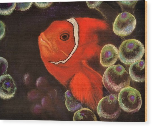 Clown Fish In Hiding  Pastel Wood Print
