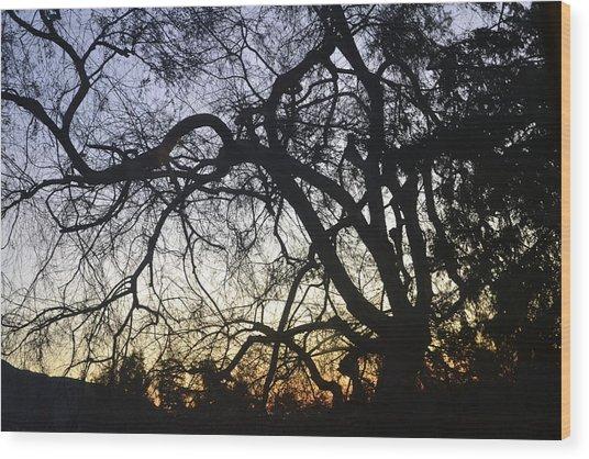 Cluttered Sunrise Wood Print by Kiros Berhane