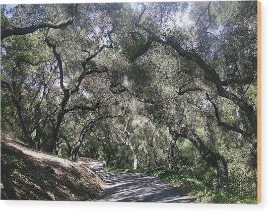 Coast Live Oaks Wood Print