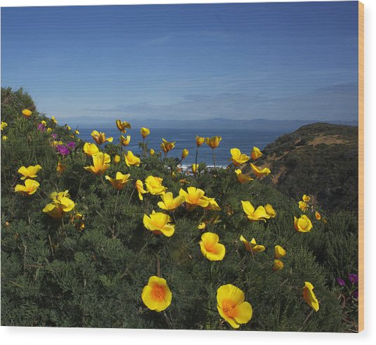 Coastal California Poppies Wood Print