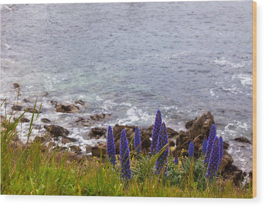 Coastal Cliff Flowers Wood Print