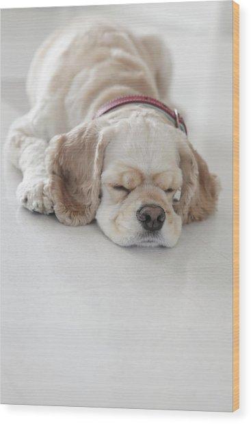 Cocker Spaniel Dog Sleeping Wood Print