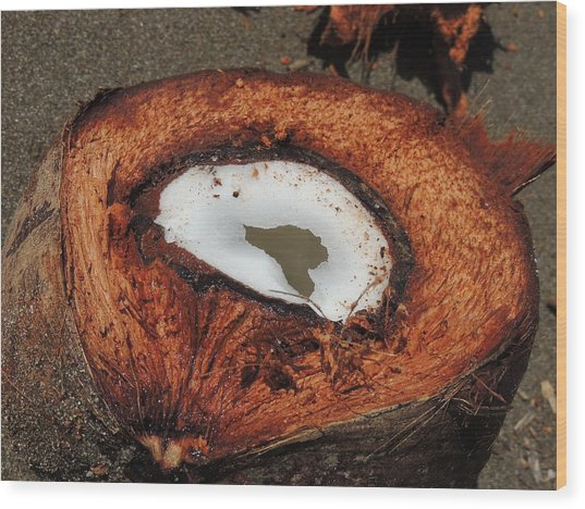 Coconut Wood Print by Gregory Young