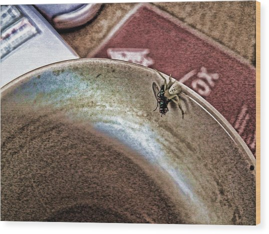 Coffee Cup Spider Fly Oh My Wood Print