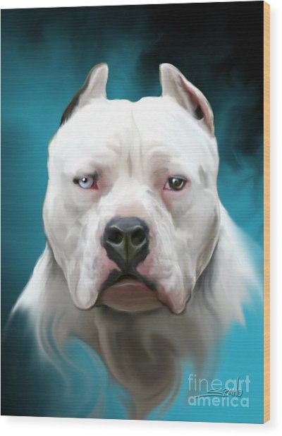 Cold As Ice- Pit Bull By Spano Wood Print
