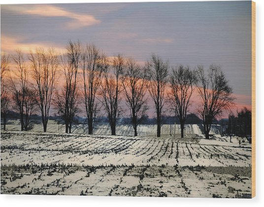 Cold Morning Treeline Wood Print