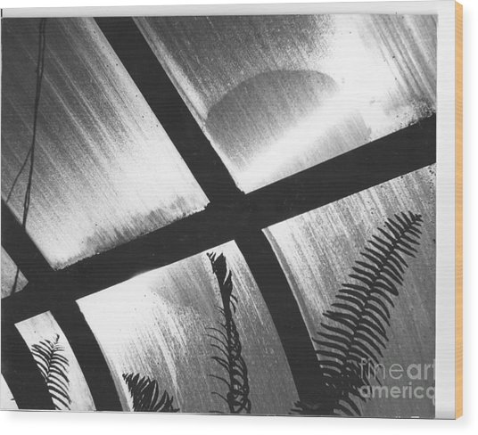 Cold Sun Wood Print