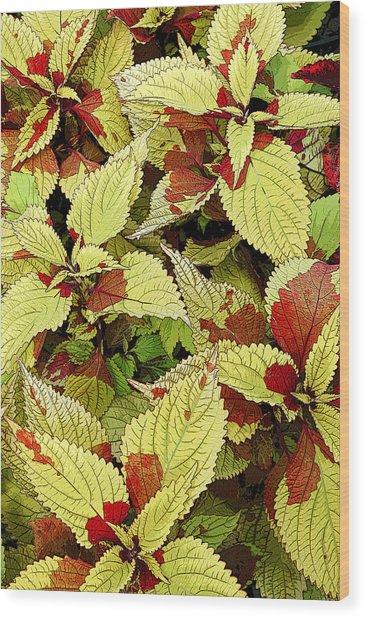 Coleus Detail Wood Print