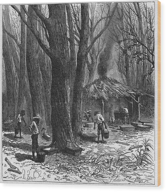 Collecting Maple Tree Sap Wood Print