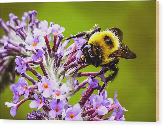 Collecting Pollen Wood Print
