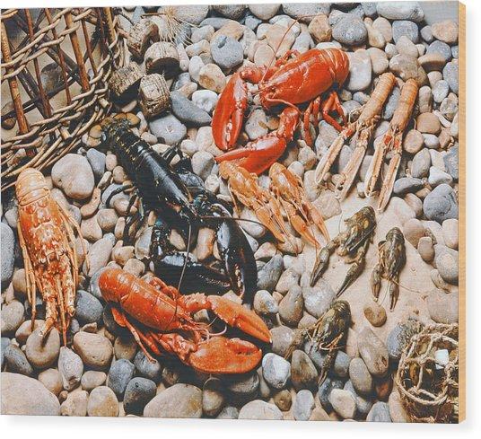 Collection Of Shellfish Wood Print