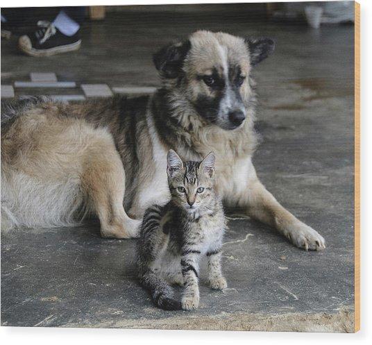 Colombia, Minca Kitten And Dog Wood Print by Matt Freedman