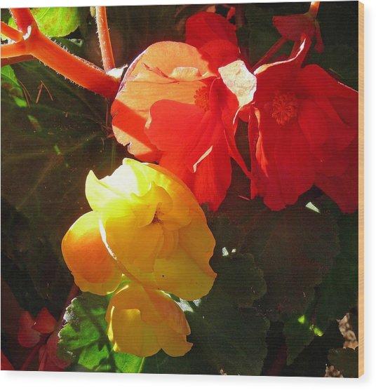 Color Burst Wood Print by Gracia  Molloy