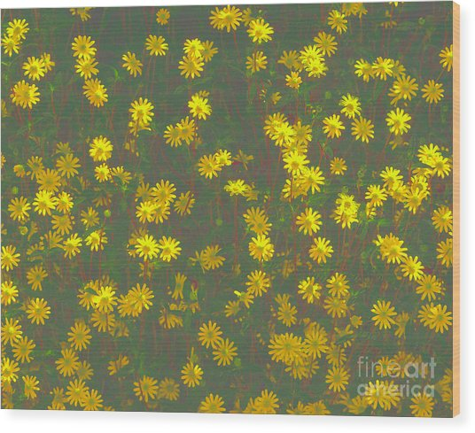 Color Flower Wall Wood Print