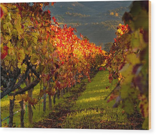 Color On The Vine Wood Print