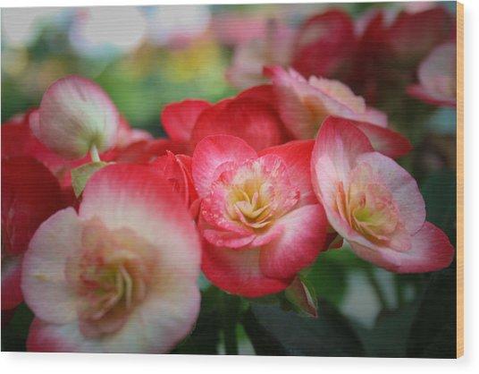 Color Soft Wood Print