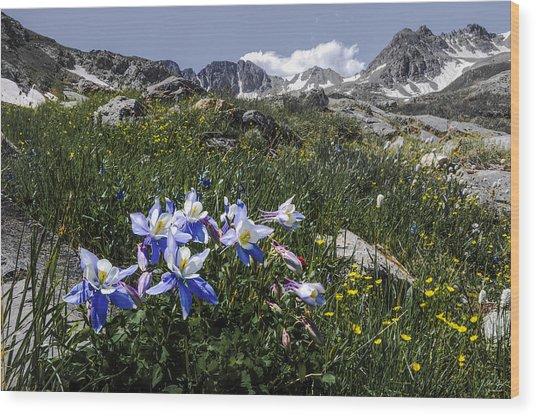 Colorado Columbines Wood Print