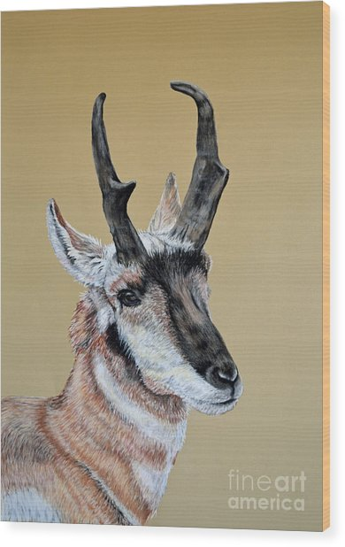 Colorado Plains Antelope Wood Print by Ann Marie Chaffin