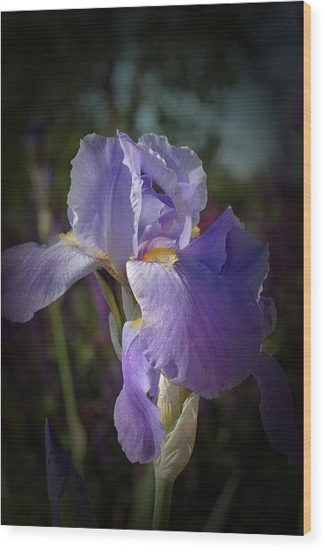 Colorado Purple Iris Wood Print