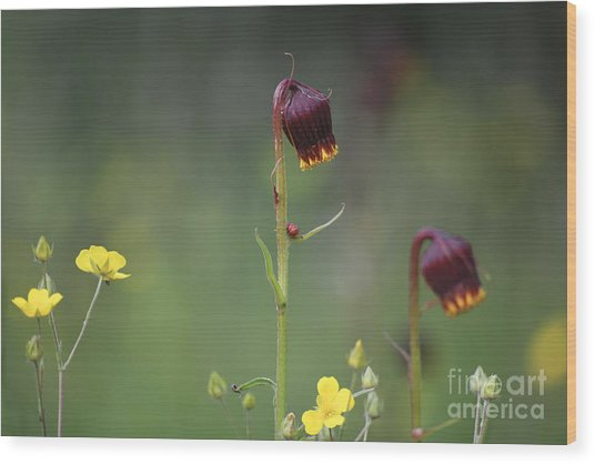 Wood Print featuring the photograph Colorado Wildflowers by Kate Avery