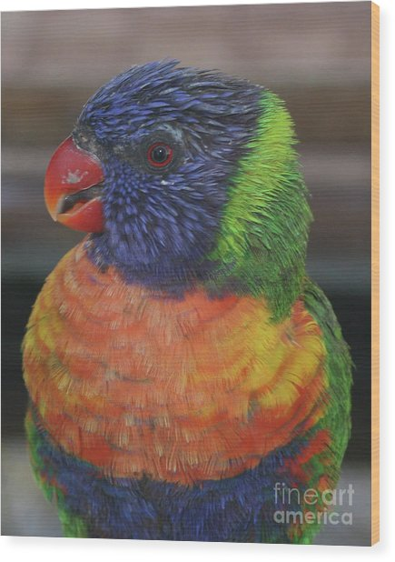 Colored Feathers Wood Print