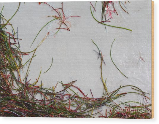 Colorful Beach Grass Wood Print