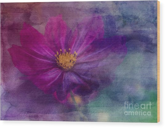 Colorful Cosmos Wood Print