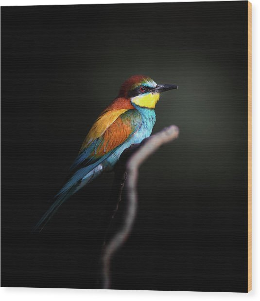 Colorful Darkly Wood Print
