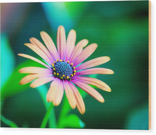 Colorful Flower Wood Print by Tammy Smith
