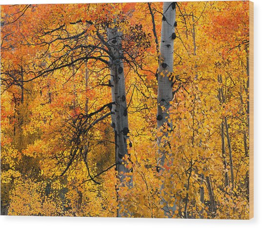 Colorful Glow Wood Print by Leland D Howard