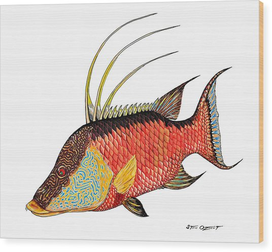 Colorful Hogfish Wood Print