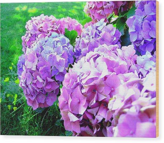 Colorful Hydrangeas Wood Print by Mavis Reid Nugent