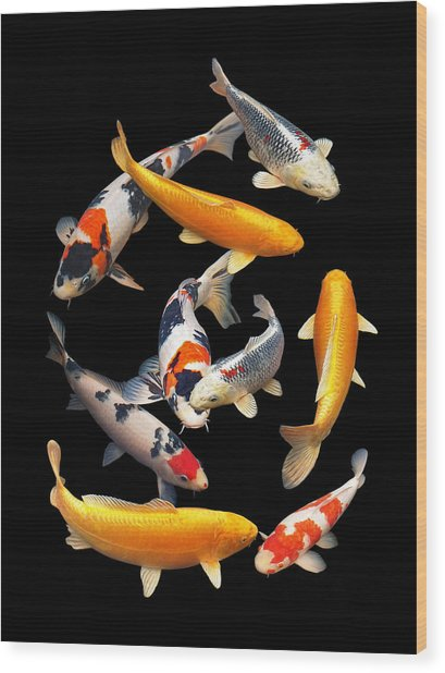 Colorful Japanese Koi Vertical Wood Print