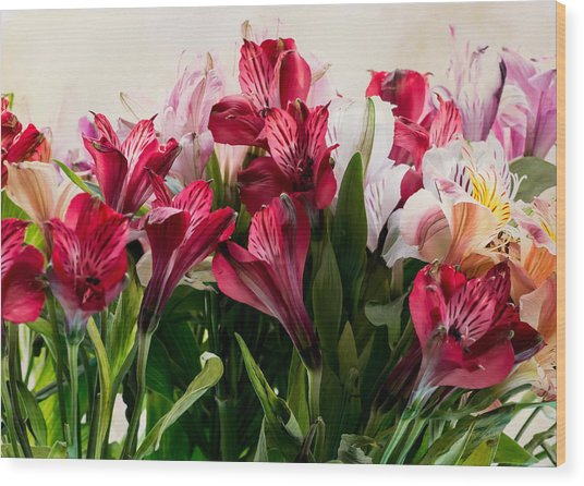 Colorful Peruvian Lillys Wood Print