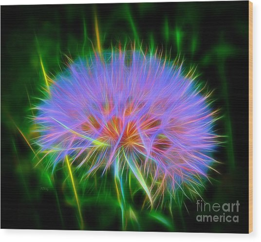 Colorful Puffball Wood Print
