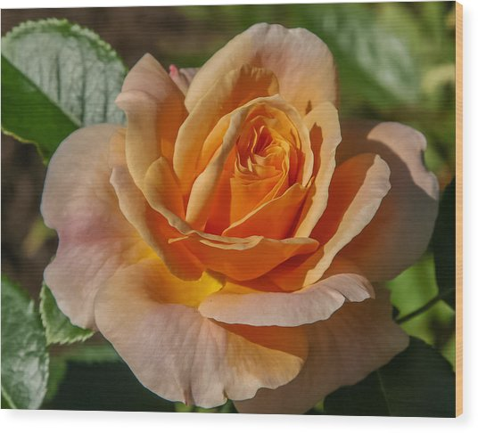 Colorful Rose Wood Print