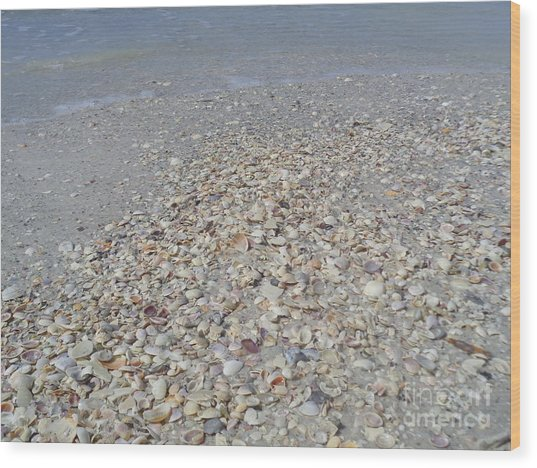 Colorful Shells At The Water's Edge Wood Print