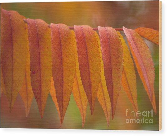 Colorful Sumac Foliage In Fall Wood Print
