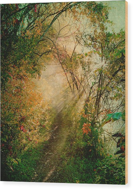 Colorful Sunlit Path Wood Print