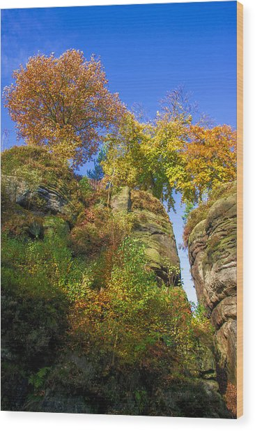 Colorful Trees In The Elbe Sandstone Mountains Wood Print