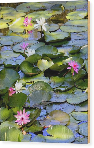 Colorful Water Lily Pond Wood Print