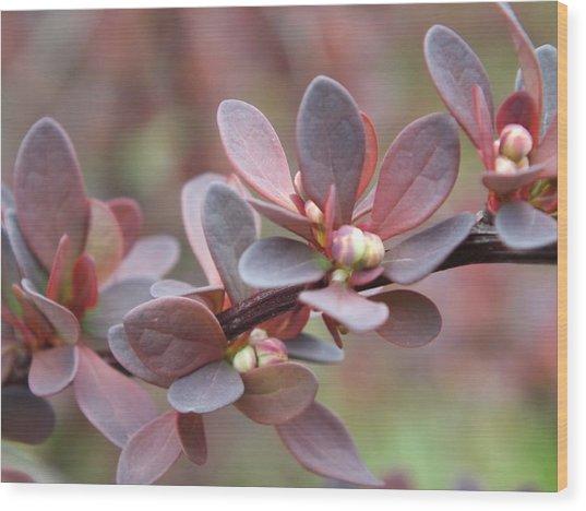 Colors Of Spring Wood Print