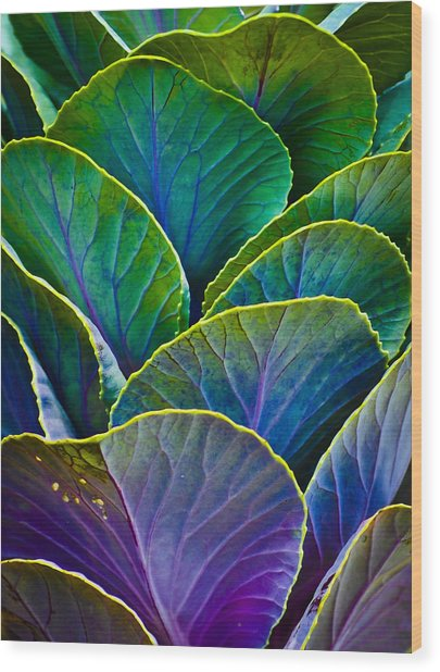 Colors Of The Cabbage Patch Wood Print