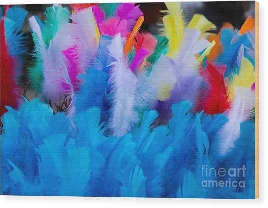 Coloured Easter Feathers Wood Print