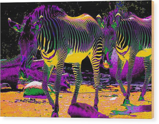 Colourful Zebras  Wood Print
