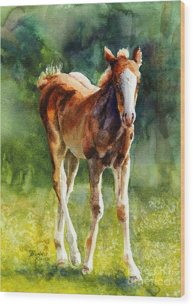 Colt In Green Pastures Wood Print