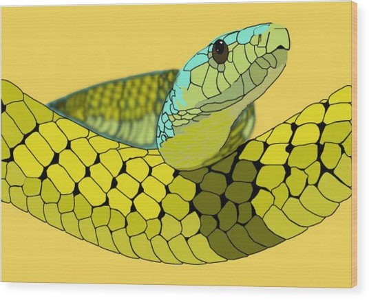 Columbian Snake Wood Print by Katelyn Sherman