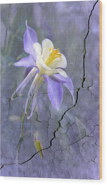 Columbine On Cracked Wall Wood Print