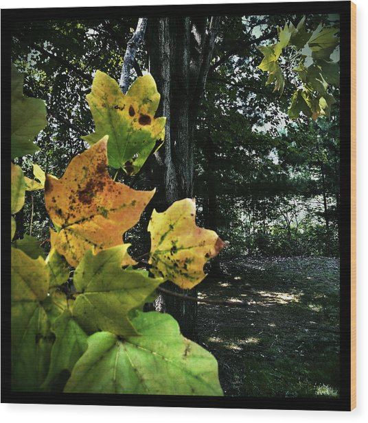 Wood Print featuring the photograph Coming Of Fall by Al Harden