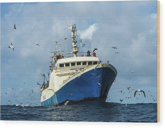 Commercial Purse-sein Trawler Wood Print by Peter Chadwick